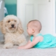 crawling baby and dog on carpet floor